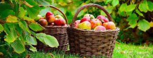 jablkaII